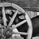 """goat andwheel bw in farm yard"" by ChrisAndrews"