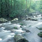 """Smoky Mountains - Porters Creek, Great Smoky Mount"" by timseaver"