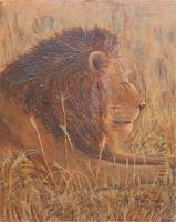 Lion in Profile Painting