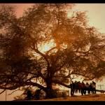 """""""tree of life"""" by XiLLhYjEnNiE"""