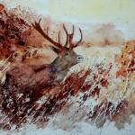 """""""stag"""" by pol"""