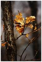 a withered leaf