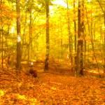 """Autumn Walk"" by jbuzz"