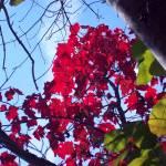 """Autumn Angle"" by jbuzz"