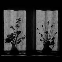 Window Shadow on Curtain, Floral Still Life