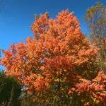 """""""Fall Nature"""" by Candi"""