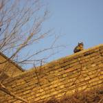 """""""Cat in high places"""" by stusk"""