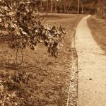 """The path"" by stusk"