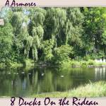 """8 ducks on the Rideau...."" by showmeone"