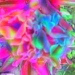 """""""RainbowPeony"""" by fantasm01"""