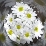 """""""White By Nature.."""" by walaa-almehry"""