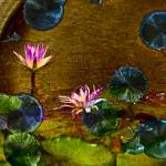 """Pink Waterlily on Gold Background"" by johncorney"