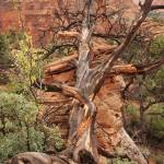 """Zion National Park"" by pauljowen"