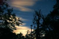 Moonlight and Forest in Bahia Escondida, Patagonia