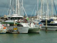 marina tourists Hervey Bay Queensland Australia