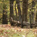 """""""Woodland Fencing"""" by blueridgepictures"""