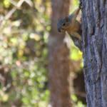 """Querious Squirrel"" by blueridgepictures"