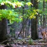 """""""Deep Woods"""" by blueridgepictures"""