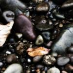 """Rocky Shore"" by juliedavisphoto"