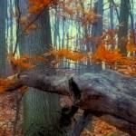 """Waking Wood"" by PIXELODEON"