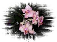 Orchid Frame 1