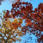 """""""Fall foliage"""" by BantamStudio"""