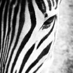 """Stripes"" by wendyaperry"