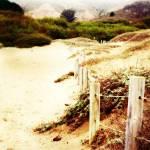 """""""Muir beach"""" by wendyaperry"""