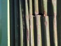 industrial bamboo