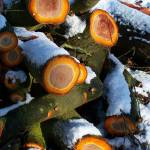 """snow cut logs"" by Winston"