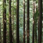 """""""Muir Woods"""" by dolfinz"""