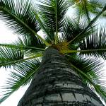"""Palm Tree"" by CruisAir"
