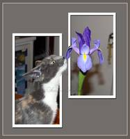 Randee sniffing a flower, OOB (Out of bounds)