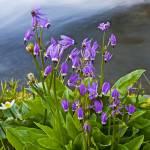 """""""Wildflower Cascade"""" by Dawsonimages"""