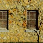 """Shadow Tree"" by tgoslett"