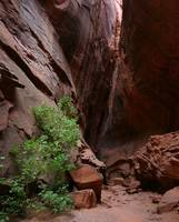 Slot canyon, Burr Trail, Utah