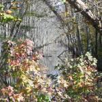 """River Autumn"" by JeanDavisOlecki"