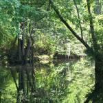 """""""Reflections on Little Creek"""" by JeanDavisOlecki"""