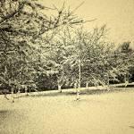 """Winter Warmth"" by LunarImage"