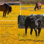"""""""HORSES in a field of flower horses"""" by iHorse"""