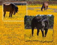HORSES in a field of flower horses