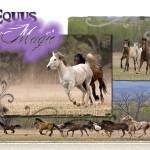 """""""Horse herd"""" by iHorse"""