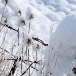 """""""First Snow"""" by craglynn"""
