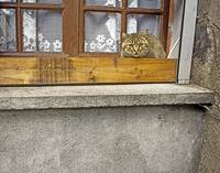 Cat in Montresor, France