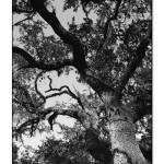 """Tree B&W"" by artisticexpressions"
