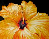 Yellow Hibiscus April 2007 by M Baldwin