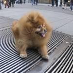 """Funny dog"" by elbardamu"