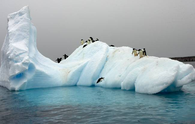 Link to imagekind.com for photo of Adelie penguins on ice