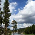 """""""Pine tree along the Yellowstone River"""" by photosbycharlie"""