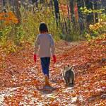 """""""Autumn Walk"""" by shelshots"""